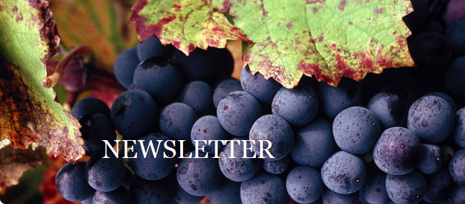 newsletter vin